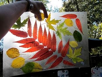 коллаж из листьев